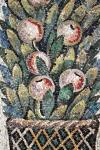 Pianta decorativa con frutti