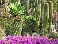 Area delle piante succulente
