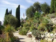 Un viale dei giardini Hanbury